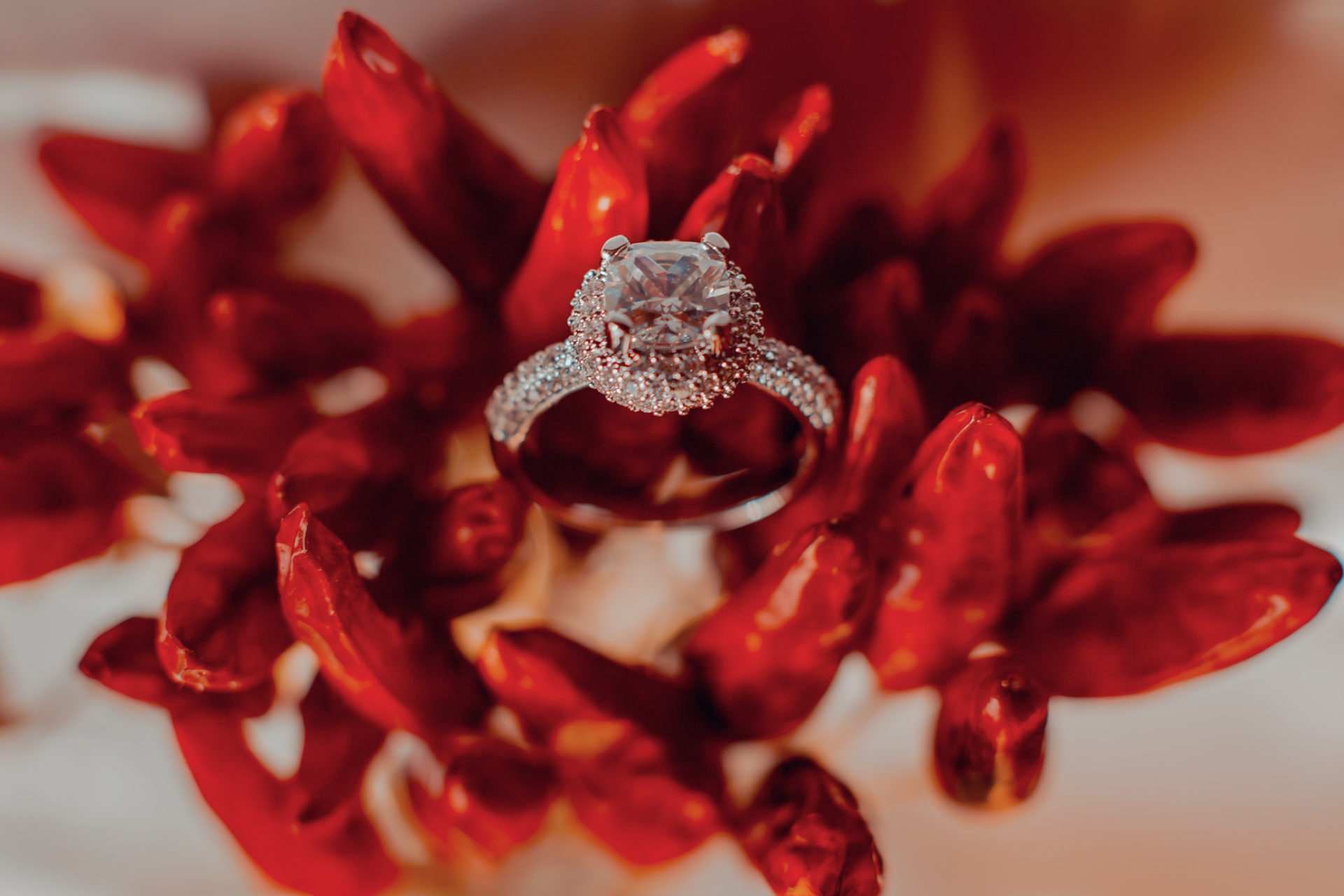 GLPSTUDIO fotografo - Un pizzico di peperoncino e la tua vita cambia per sempre.