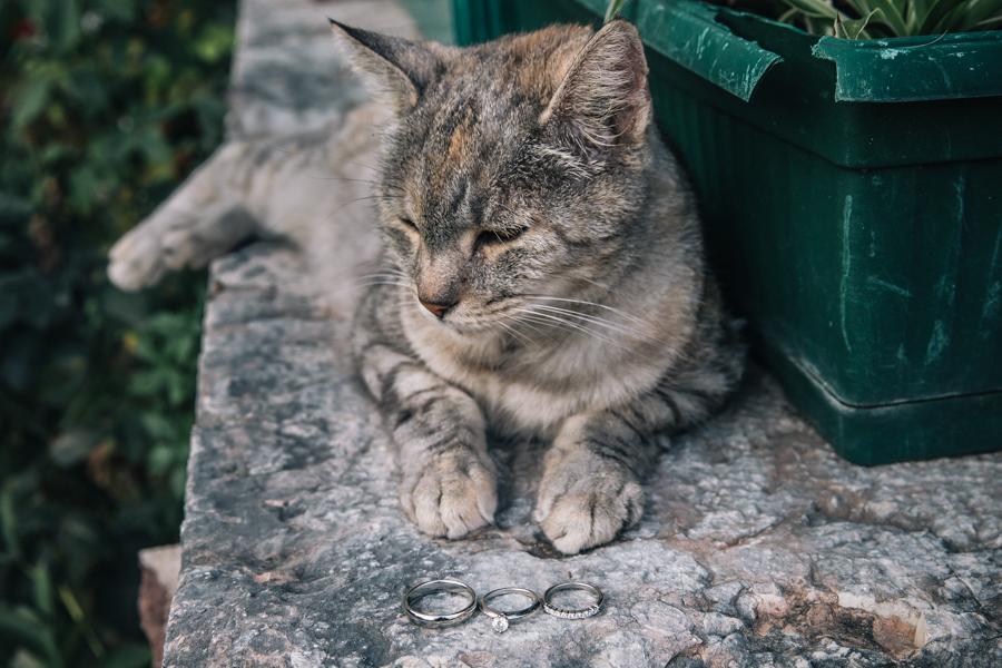 Il gatto guardiano degli anelli GLPSTUDIO Photo & Video